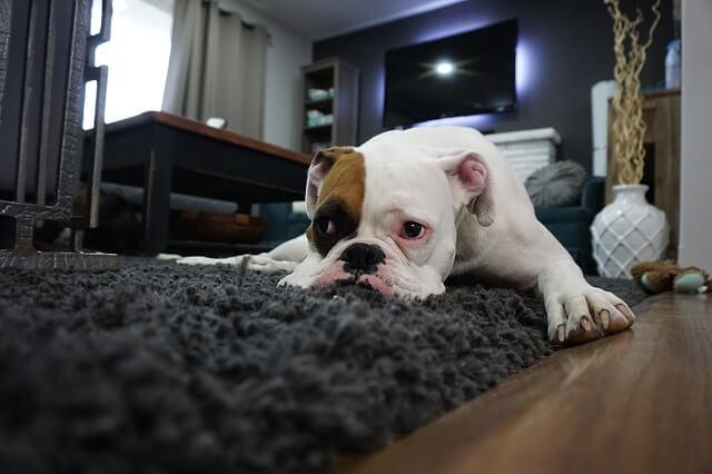 Ein Trampolin zu Weihnachten - Werbesport - Hund Buster - trampolin-profi.de