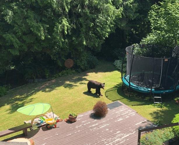 Hält ein Trampolin einen Schwarzbären aus? - trampolin-profi.de