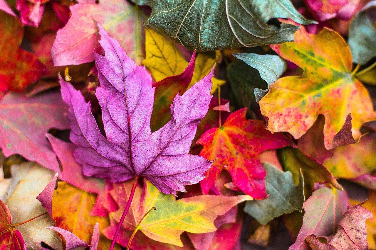 Mein Trampolin im Herbst: Achtung vor Laub & Co. am Schutzrand - Ratgeber TRAMPOLIN PROFI