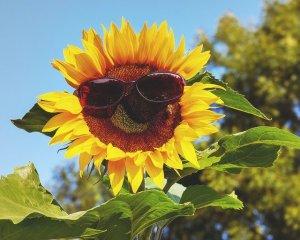 UV-Strahlung - schützen Sie Ihr Gartentrampolin - Ratgeber trampolin-profi.de